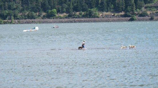 Hood River, Oregon: Walking the dog on water