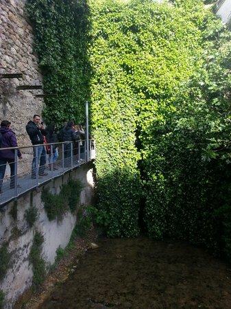 Bóveda del Rio Cerezuelo: Entrada a la bóveda, oculta por la hiedra