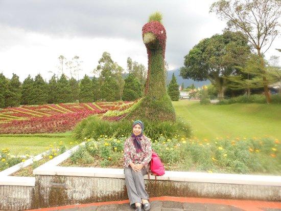 Panas Panas Narsiz Di Tengah Taman Mpii Picture Of Taman Bunga Nusantara Cianjur Tripadvisor
