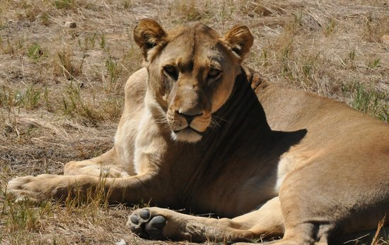 Fairy Glen Private Game Reserve: Can we talk?