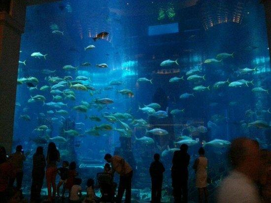 Atlantis, The Palm: acquario per le immersioni ,vetrata inerna