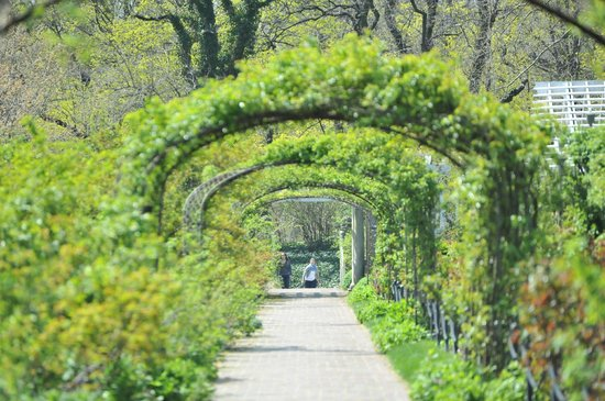 Cherry blossom festival picture of brooklyn botanic garden brooklyn tripadvisor for Brooklyn botanical garden tickets