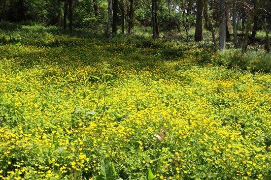 Yumenoshima Park: 第五福竜丸裏の林の中は花が自然に群生しています