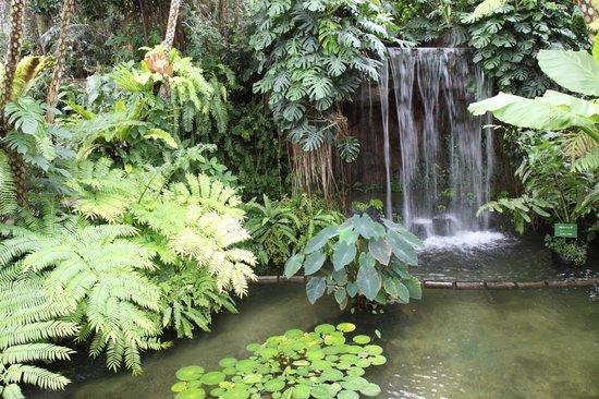 Yumenoshima Park: 夢の島熱帯植物館の中は南国ムード