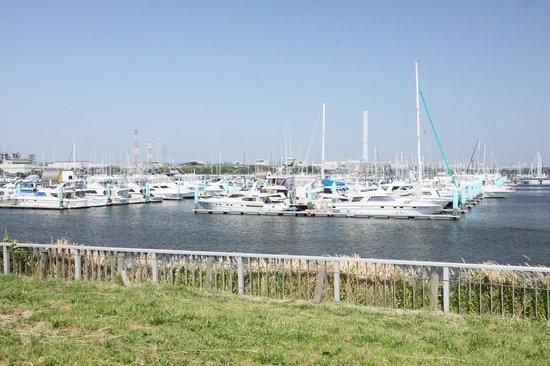 Yumenoshima Park: 開放的なヨットハーバー