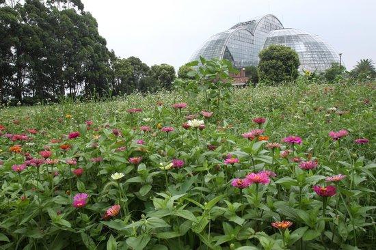 Yumenoshima Park: 散歩道沿道には花が咲き乱れています
