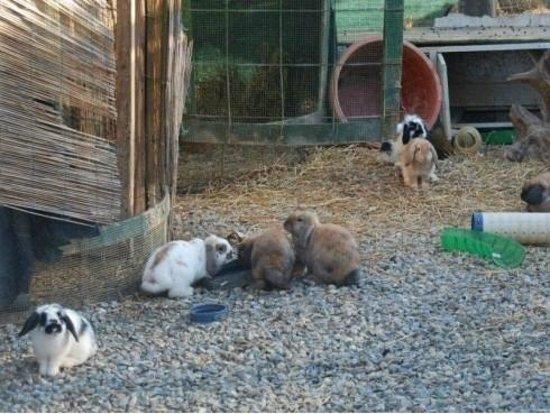 Agriturismo La Moriccia : Una delle specie presenti nello zoo della Moriccia