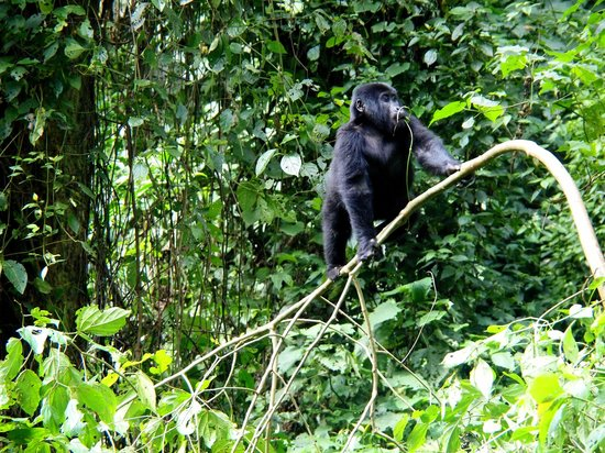 Bwindi Lodge: Wonderful experience