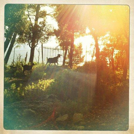 El Encinar Valldemossa Hotel: Ziegenherde auf Hotelgelände