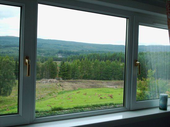 Netherwood Bed & Breakfast: window view