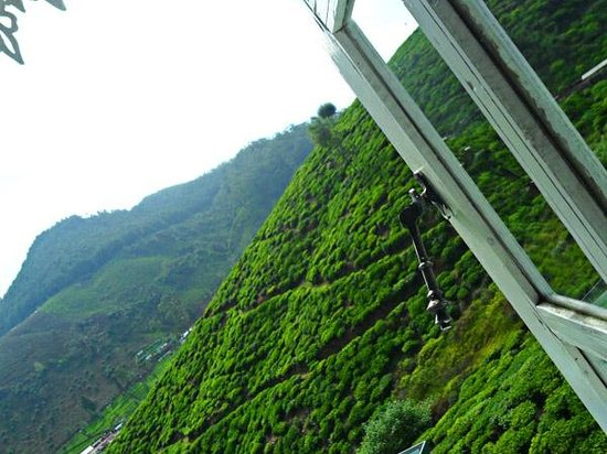 Green Forest Hotel: View From Room