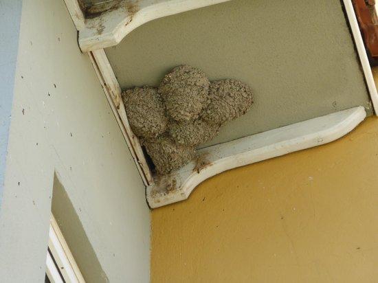 Club Alla Turca: Swallow nests