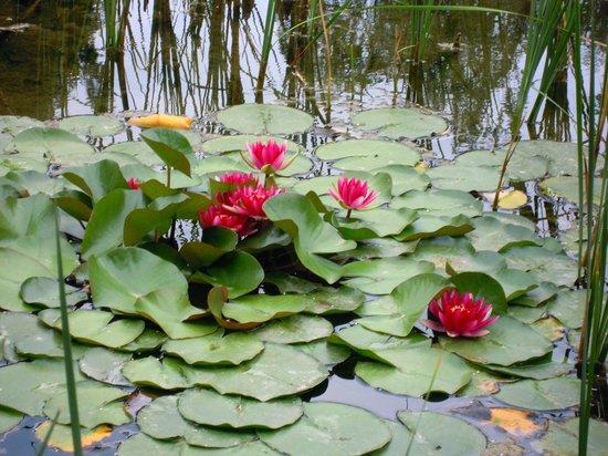 Margaret Island (Margitsziget): giardino giapponese
