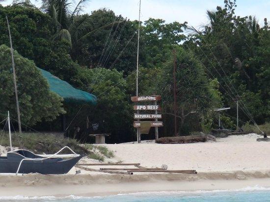 Apo Reef Natural Park: apo reef national park