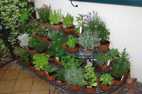 Hotel Isa: Herb garden