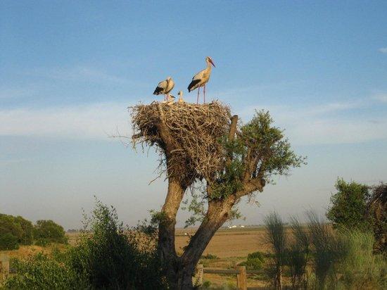 Ardea Purpurea Lodge: Y aves... muchísimas aves
