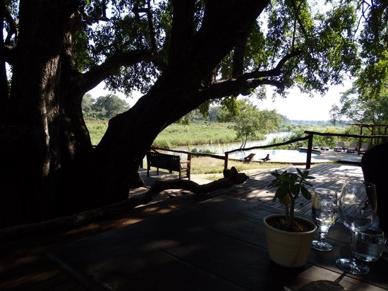 Lion Sands - Tinga Lodge: Lunch under a huge shady tree