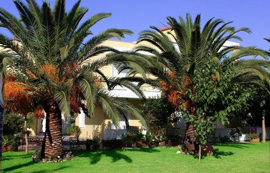 Athena Hotel: Palm trees - Garden