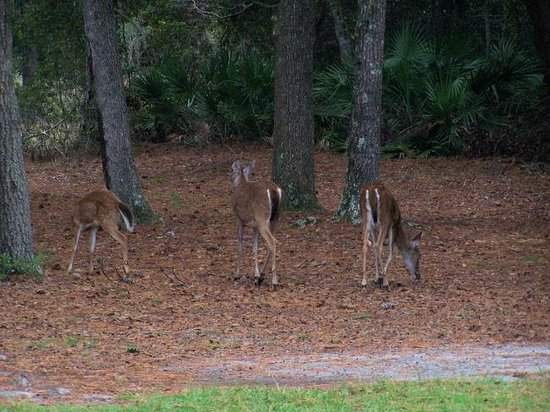 Okefenokee National Wildlife Refuge: To be able to get so close to deer was magical
