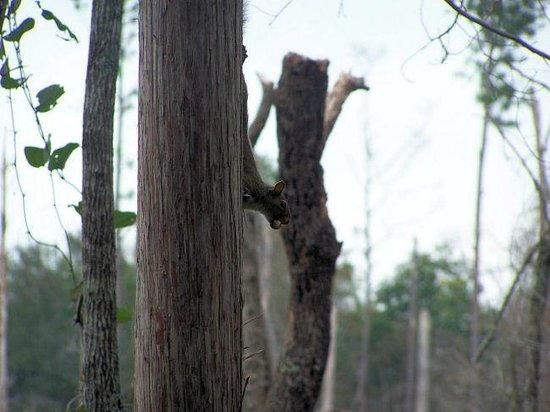 Okefenokee National Wildlife Refuge: This little guy thought we couldn't see him.