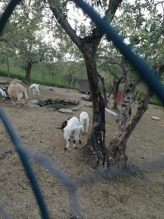 Agriturismo La Casella : la fattoria