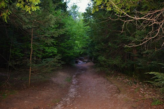 Scout Valley Trail in Orillia