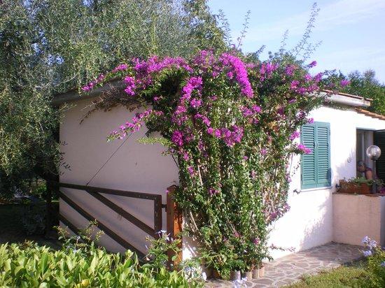 Agriturismo Due Palme : giardino