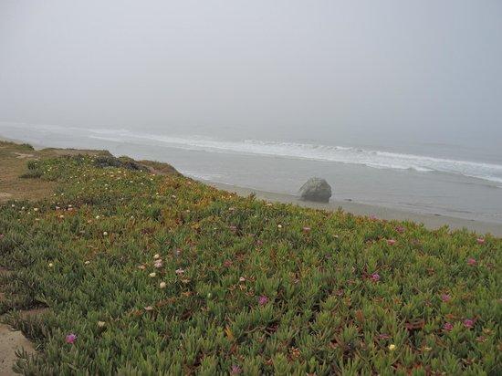 Cavalier Oceanfront Resort: Walk along the bluff above the beach