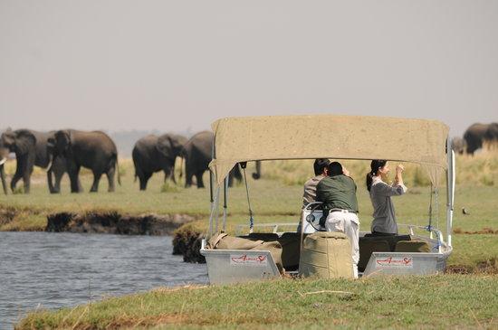 Ngoma Safari Lodge: Chobe River Cruise - a highlight of your stay!