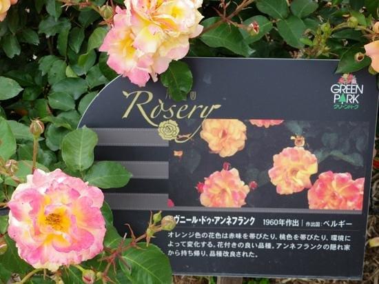 Green Park : アンネフランクのバラ