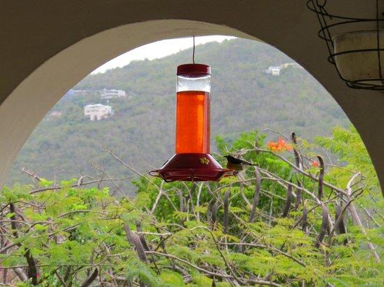 "Hummingbird House: ""Hummingbird"""