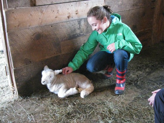 Vermont Grand View Farm and Bed & Breakfast: Visiting with a new lamb