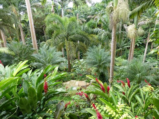 Hunte's Gardens: Taken when sipping the Rum with Anthony.