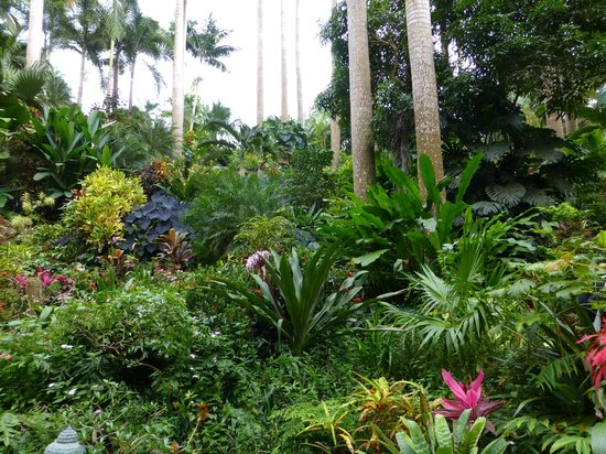 Hunte's Gardens: Down in the lush gully.