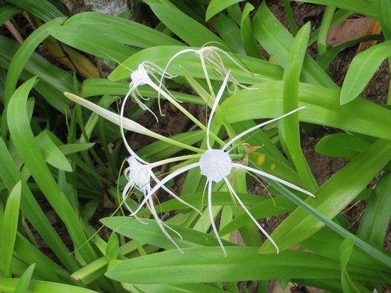 Kamalaya Koh Samui: flowers in garden