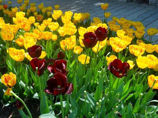 Dilhayat Kalfa Hotel: Tulip City!