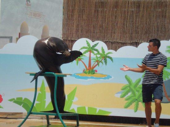Aqua Natura : actuación con leones marinos