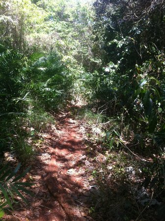 Playa Madama: Trail into the beach