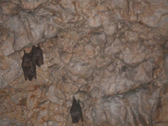 Playa Madama: You won't be alone in the cave!