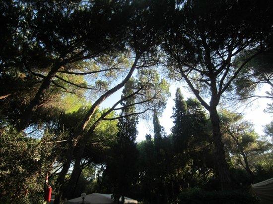 Camping Il Capannino: Vista tra gli alberi