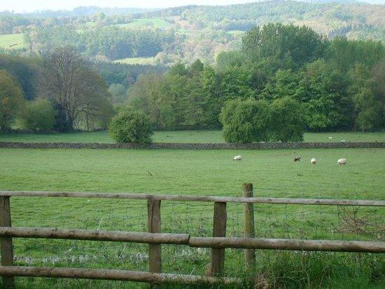 Crowtrees Farm Bed & Breakfast: Fields