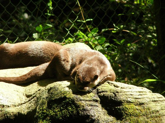 Cornish Seal Sanctuary: otters