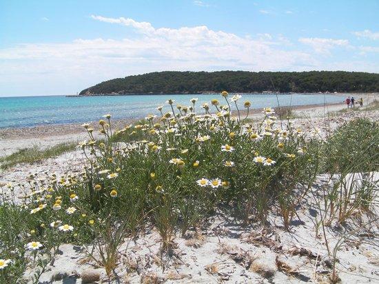 S'Attobiu B&B and Guest-houses: Beach at Porto Pino