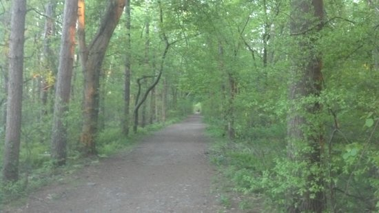 Sheraton Needham Hotel: Awesome, wide running trail appx 1 mi away.