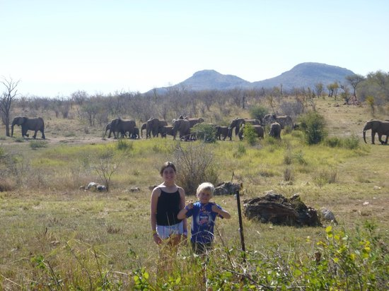 Motswiri Private Safari Lodge: Elephants at the back door of room 6
