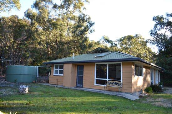 Eagles Rise Tasmania : Banksia