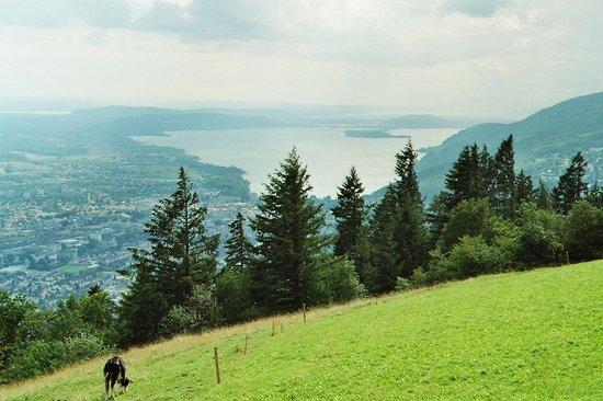Bozingenberg