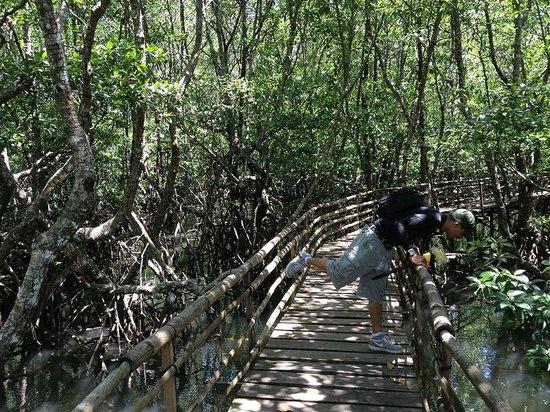 Majika's Island Resort: Mangrove Forest