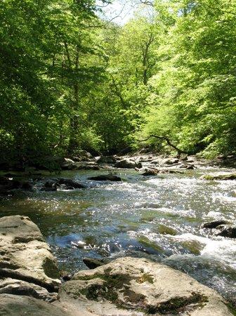 Ridley Creek State Park: creek