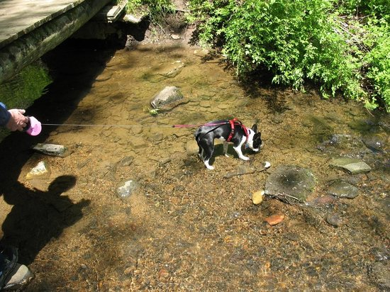 Ridley Creek State Park: Lucy
